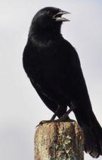 O Canto do Pássaro Preto by LusLeme