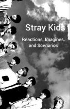 Stray Kids || Reactions, Imagines, and Scenarios by TayTayMarie720