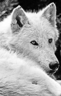 Magányos farkas §Lassan Íródik§ cover