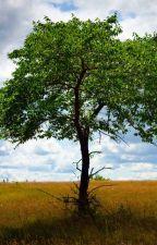 El árbol de mi patio by moragomezandrea