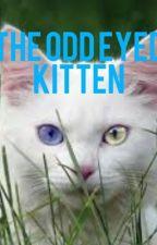 The Odd Eyed Kitten by Allybelle13