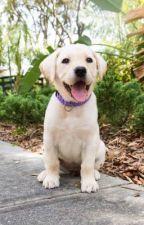 Individual Dog Roleplay by RoyalCherryBlossom