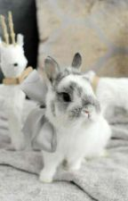 Small Hops 🌺Jungkook × Bunny!Reader| by HhoneyPuppy