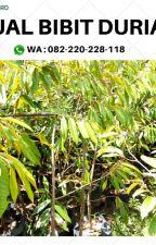 ISTIMEWA ..! HP/WA*082-220-228-118, Jual bibit durian musang king di agam by jualpohondurian