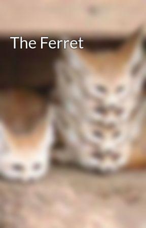 The Ferret by MotherofBulls