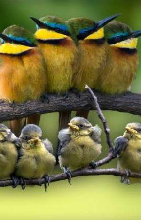 BIRD FAMILY ONLY! by randomfandoms01