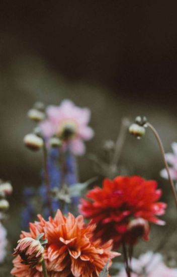 Raevan Manor | Graphic Gallery