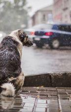 Одинокий пёс by SlavaVovk