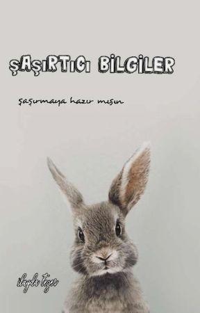 ŞAŞIRTICI BİLGİLER by ilaydatzr