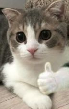 ⊱ miraculous one-shots ⊰  by gnfdiary