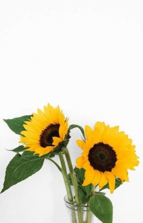 sunflowers bloomed that summer by way-t00-gay