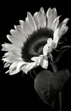 ☾Sunflower [MissaSinfonia × Mr. Phillip]☽ by andgelatine_