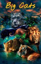 Big Cats | bts x reader  by BangtanCrackers