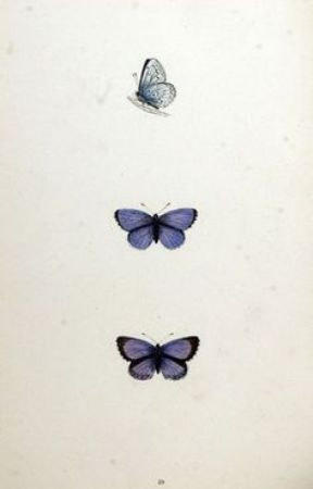 Kelebekler by betshera