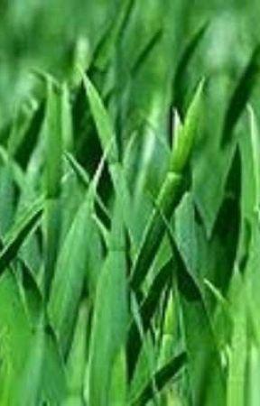 grass by usernameahahah