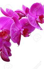 بدر by OrchidaFlower