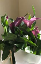Butterflies by wasted_writing