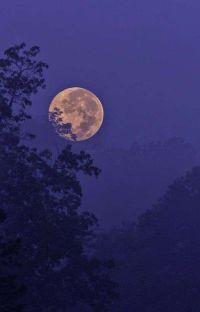 ★RolePlay Temáticas★ cover