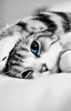 Warrior cats randomness by jayflight202