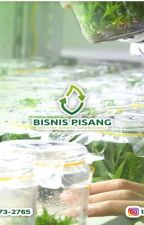 WA 0823-2773-2765 Suplier bibit pisang raja sajen by rehansaputra02