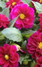 Bunga Dahlia, Bungaku Yang Hilang by AriWicaksono006