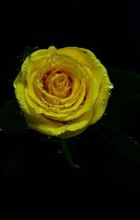 yellow rosesjaeden martell by IsabellaKanefsky