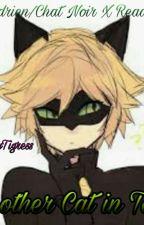 Another Cat in Town Adrien/Cat Noir X Reader by KittyTigress