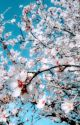 Bleach - One Shot by AyanoJaggerjack