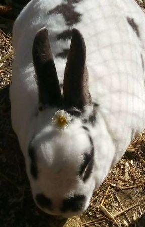 366 Days Of Rabbit!  by Snakey-Sideburns