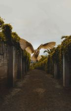 Owl in the Night by MavenofSpook