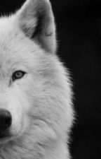 Der Alphamate by wolki7