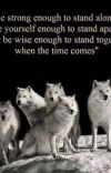 Divergent werewolves  cover