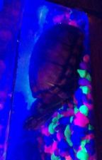 A Turtle's nostril  by bobertmcrobert