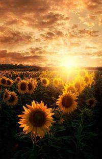[ Chiến Bác ] Memories of sunrise ( Ký ức mặt trời mọc ) cover