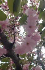 Falling petals by Hi1444