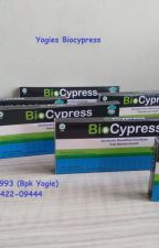 WA 0895-3422-09444 - Biocypress Di Lazada Kota Agam by yogiesherbal