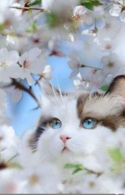 Đọc truyện [Jensoo] Say Đắm Một Nàng Mèo