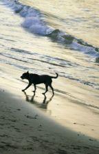 Dog of Bondi Rescue by Alucrystalwolves