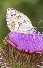 Mi mariposa me llevo a Escocia by loreines