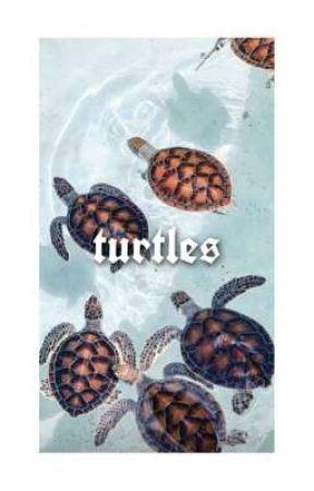 turtles ~ noah schnapp, finn wolfhard by maybexno