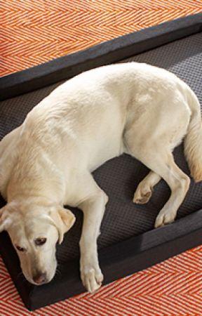 Amazing Benefits Of Having Bed For Pets - Layla Sleep by laylasleep