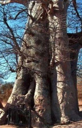 The baobab tree by boy134