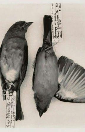 ölü kırlangıçlar, yuwin by thatislouisa