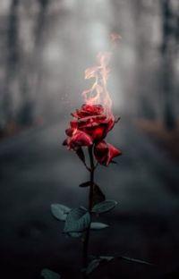 Yanan Çiçekler cover