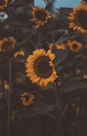 You're my sunflower [Oneshot] by its_windyyday