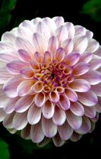 Betray Me Softly by Strangeoutcast