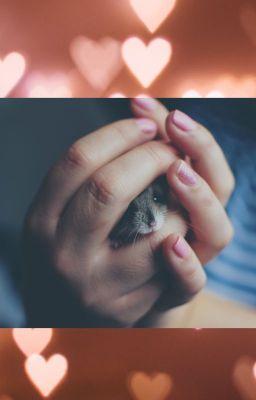 Đọc truyện [Trans] Tỉnh dậy một giấc biến thành hamster rồi, làm sao đây?
