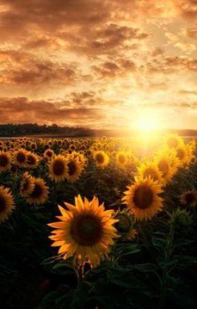 Sunflower || MB/S by sunnyruler