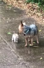 Dog Goes Out For Pee, Comes Back With A Kitten She Rescued by KaiBeerworth