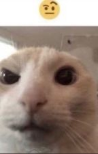World History But Gay (Countryhumans) by MoonyWritesGarbage